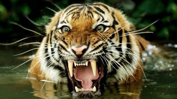 کشنده ترین حیوانات جهان!