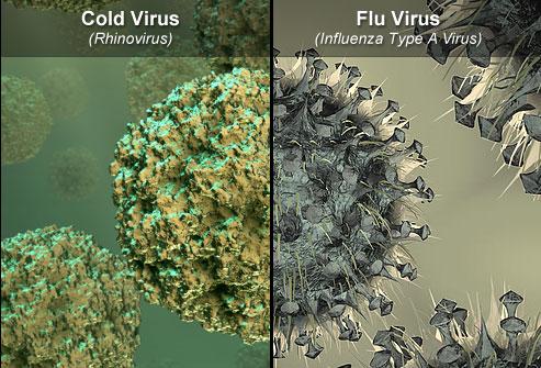 آنفولانزا و سرما خوردگی چه تفاوتی دارند؟